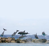 Flying dolphins. Above sealine stones. Williemstad,  Curacao Stock Images