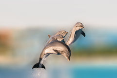 Flying dolphins having fun jumping out of the water. stock image