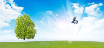 Flying dove Royalty Free Stock Photo