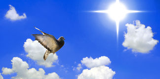 Flying Dove. Pigeon flying into the blue sky Stock Photo