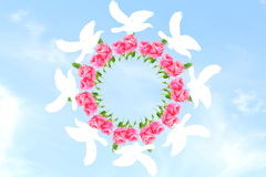 Flying dove around rose flower in sky background Royalty Free Stock Image