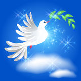 Flying dove with branch in the sky Stock Photography
