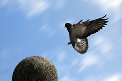 Flying dove. The dove is flying on the sphere statue on blue sky background Royalty Free Stock Images