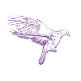 Flying dove vector llustration realistic sketch Stock Image
