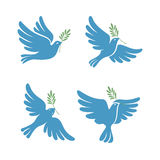 Flying dove vector sketch set. Dove of Peace. Royalty Free Stock Photography