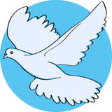 Flying dove. Flying white dove on the blue background Stock Photos