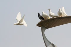 Flying doves. With sky background Royalty Free Stock Image