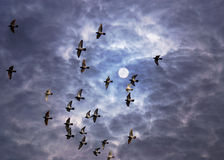 Free Flying Doves Royalty Free Stock Photos - 4779178