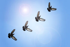 Flying doves Royalty Free Stock Photography
