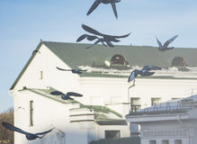 Flying doves. On the background of the monastery and the blue sky Stock Images