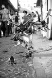 Flying Doves. In Lisbon, Portugal Stock Photo