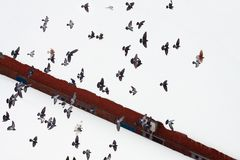 Flying doves over the snow background. Contrast color composition Stock Images