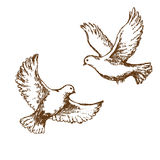 Flying doves Royalty Free Stock Images