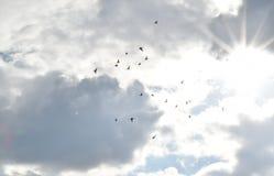 Flying doves in the sky. Doves, birds, flying doves, birds and sky, sun and birds, sunshine and doves, sun in the sky Stock Photos