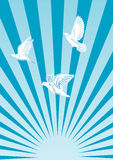 Flying doves in the sun. Vector image of sunset, sunrise, pigeons. Flying doves in the sun Royalty Free Illustration