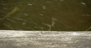 A flying dragonfly 4K FS700 Odyssey 7Q Royalty Free Stock Image