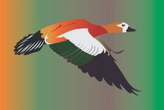 Flying duck. Colorful exotic beautiful flying duck stock illustration