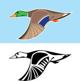 Flying Duck Vector Illustration Royalty Free Stock Photo