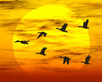 Flying ducks. Sunset and birds. Rendered sunset scene royalty free stock image