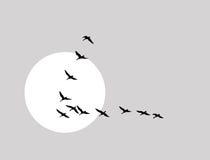 Free Flying Ducks Silhouette Stock Photos - 23031003