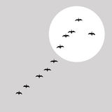 Flying ducks silhouette Stock Photos
