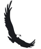 flying eagle Stock Image