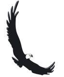 Flying eagle. Eagle flying free royalty free illustration
