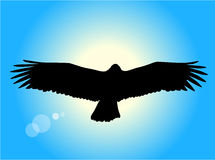 Flying eagle. Silhouette of an eagle flying in front of the setting sun Royalty Free Stock Photography
