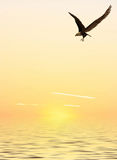 Flying Eagle. This image shows a computer generated flying eagle with sunset over the ocean royalty free illustration