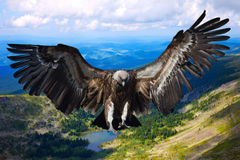 Flying eagle. Against   mountains background Stock Photo