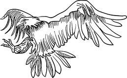 Flying eagle. Black and white line art image vector illustration