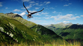 Flying Stock Image