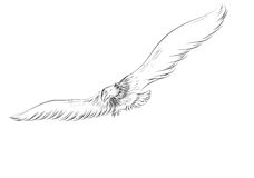 Flying eagle. Isolated on a white background vector illustration