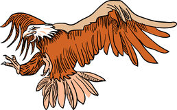 Flying eagle Stock Images