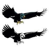 Flying eagle mascot Royalty Free Stock Photos