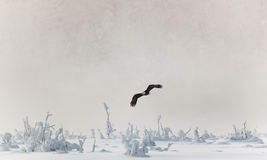 Flying eagle over snow-covered mountains. Stock Images