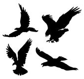 Flying Eagle Silhouettes Stock Images