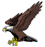 Flying eagle. Vector of flying bald eagle royalty free illustration
