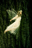 Flying fairy. Beautiful forest fairy in fligh royalty free stock photo
