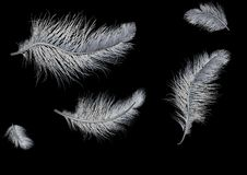 Flying feathers on black background Royalty Free Stock Photo