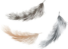 Flying feathers Royalty Free Stock Photography