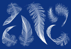 Flying feathers, vector set Stock Photo