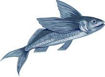 Flying Fish Drawing Royalty Free Stock Photo