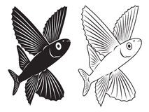 Flying fish Royalty Free Stock Images