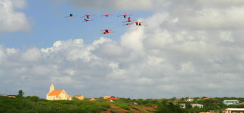 Flying flamingos Royalty Free Stock Photo