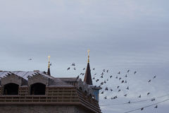 Flying flock of birds over the roof  the Protestant Church Royalty Free Stock Photo