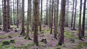 Flying through the forest in the scottish highlands stock video