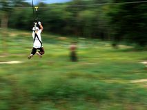 Flying fox Royalty Free Stock Photo