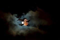 Flying Fox or fruit bat over dark sky Stock Photo