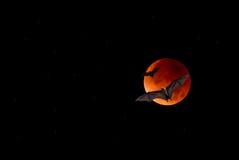 Flying Fox or fruit bat over dark sky Stock Image